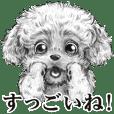 Eloquent dog's(Resale)
