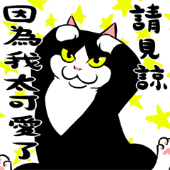 賓士貓Ohagi - 療癒篇