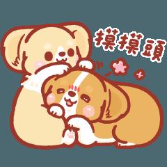 柯基犬卡卡 - 相親相愛篇♥