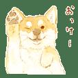 Hachi shiba illustration