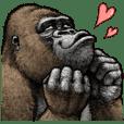 Gorilla gorilla 3