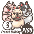 French Bulldog-PIGU III