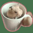 Bichu hamster life