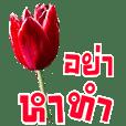 สนทนาภาษาดอกไม้ (ชีวิตทำงาน)