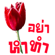Flower Language (Working Life)