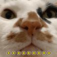 Sanhua cat daily