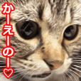 Chori sticker What a cute!