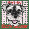 Smiley Schnauzers