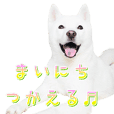 Cute white dog's sticker