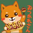 """Shiba dog """"MUSASHI"""" 9.Oosaka accent"""