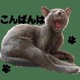 akemi watanabe_20200909183639