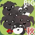 black schna 6 ranger big