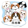 西施犬團體