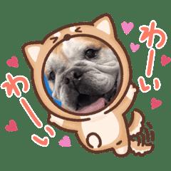 ぶさかわブルドッグのベティちゃん♡3