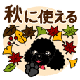Autumn of toy poodle