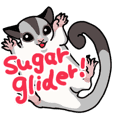 UG's Sugar Glider Sticker in English