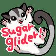 UG's Sugar Glider Sticker in English