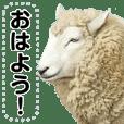 ほほえみフレンズ!羊(ひつじ)の日常生活