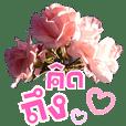 สนทนาภาษาดอกไม้ (เจ้าความรัก)