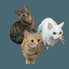 317 three cats