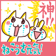 exciting cat and rabbit