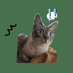 ツンデレ猫さんスタンプ