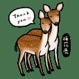 台灣特有動物們 集合囉!