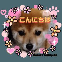 Lovely Dog Third generation