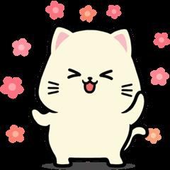 Ciko Cat