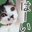 Pretty cat IO's sticker