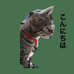 猫のティラミス