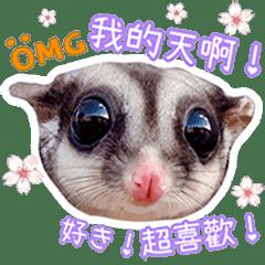 蜜袋鼯BB & B女 (第三回)