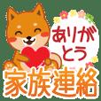 "Shiba dog ""MUSASHI"" 26 family contact"