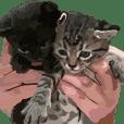 子猫スタンプ01