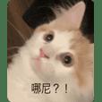 Happy cat friend