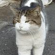 街猫ダンちゃんの独白