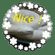 白ヘビと爬虫類の実写版