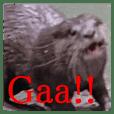 Otter violent