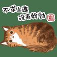 貓貓SOLA與洽米