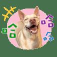 Taiwan COCO dog 01