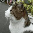 街猫ダンちゃんの独白3