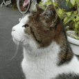 Street Cat Dan Ver.3