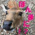 deer in NARA!