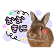 Usao of Rabbit! Stickers