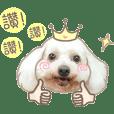 Cream Poodle - Niou Niou