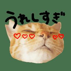 茶トラのひろちゃん♪日常スタンプ★大阪弁