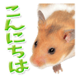 Cute hamster japanese