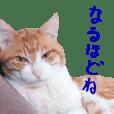 Bossy cat,POPO
