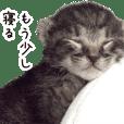 まだ目の開いていない猫の赤ちゃん2