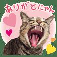 cat! cat!! cat!!! part1